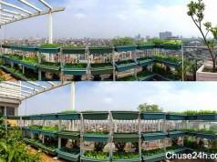Khám phá vườn rau xanh ngắt trên tầng 10