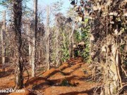 Bệnh rụng lóng, Chết dây trên cây hồ tiêu (RHIZOCTONIA SOLANI, PSEUDOMONAS SP.)