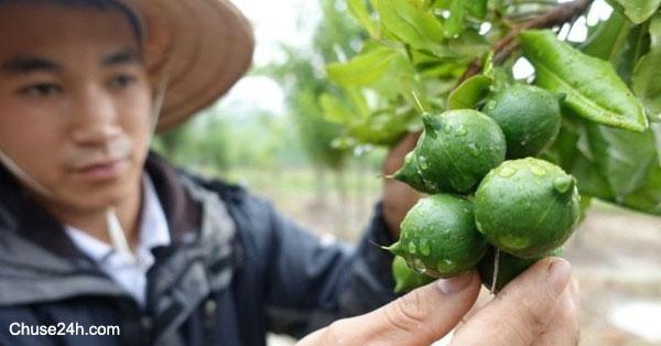 làm nông được vay đến 3 tỷ đồng, không cần tài bảo đảm