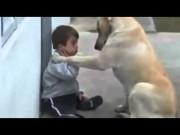xúc động chú chó an ủi, vỗ về một cậu bé thiểu năng