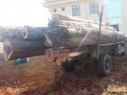 5m3 gỗ khai thác trái phép bị Hạt kiểm lâm huyện Chư Sê phát hiện, bắt giữ.