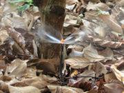 Vòi phun nước tiết kiệm tránh lãng phí nguồn nước mà không ảnh hưởng đến năng suất và chất lượng của cây trồng