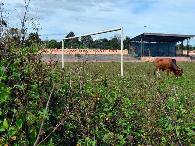 Sân vận động tiền tỉ dành để… thả bò