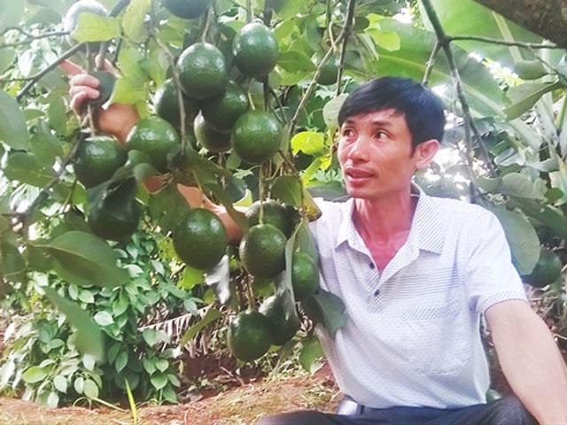 Anh Đào Vĩnh Dũng bên vườn bơ Booth của mình