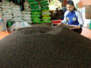 Sản phẩm hồ tiêu của một hộ nông dân chuẩn bị đưa vào nhà máy để chế biến xuất khẩu. Ảnh: TTXVN