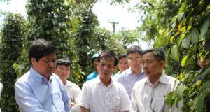Thứ trưởng Lê Quốc Doanh kiểm tra mô hình trồng tiêu tại huyện Chư Pưh