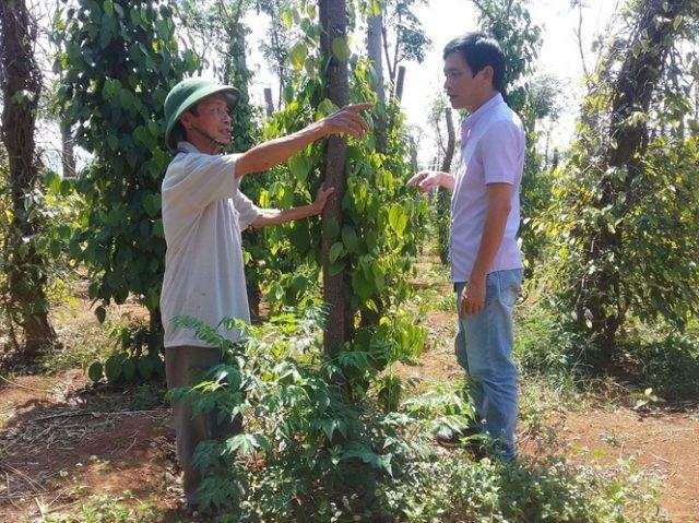 Ông Lê Văn Láng (xã Ia B'lứ, huyện Chư Pưh, Gia Lai) quyết định chuyển sang sử dụng sản phẩm sinh học hữu cơ công nghệ cao