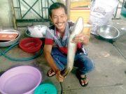 Ông Phạm Quốc Anh khoe con cá chình vừa bắt được trong lần giăng câu trên hồ Ayun Hạ