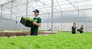 Rau là sản phẩm chủ lực của Lâm Đồng từ nhiều năm trở lại đây Ảnh: ĐOÀN KIÊN